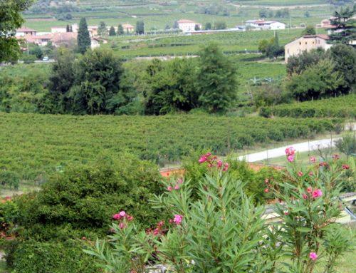 Reise zu einem typisch italienischen Weingut – Brigaldara